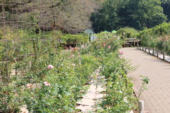 神代植物園・バラ園の風景