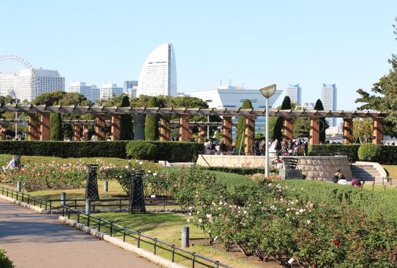 山下公園・バラ園の風景
