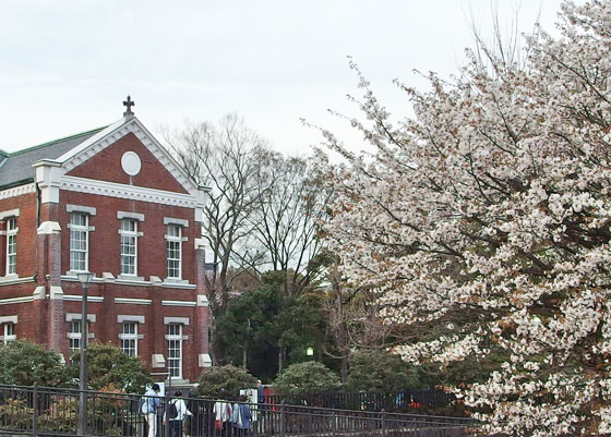 近代美術館工芸館の庭の桜