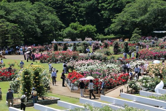 生田緑地ばら苑 2016年春
