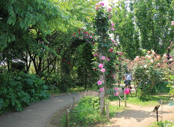 春の京成バラ園