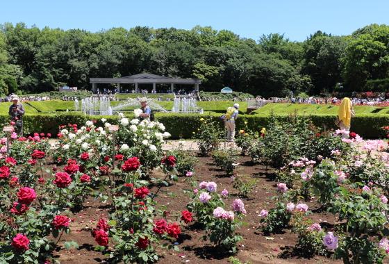 春の晴れた日の神代植物公園