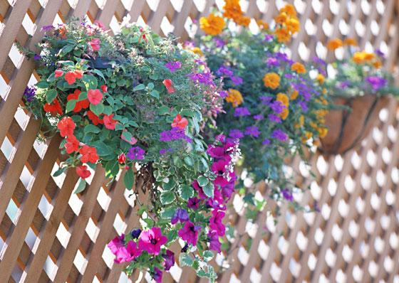 植物にとってよい土とは