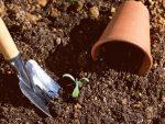 肥料を施す時期