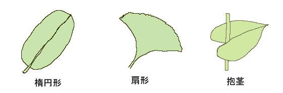 葉の種類イラスト