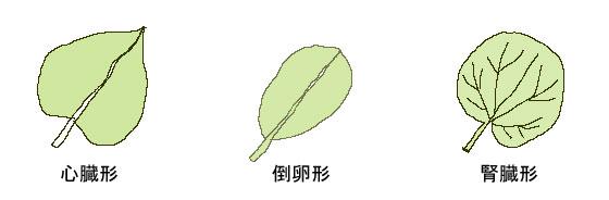 葉の種類 イラスト