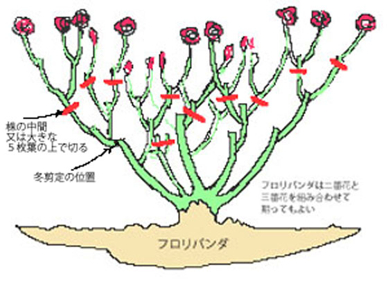 sentei-natsu-x2