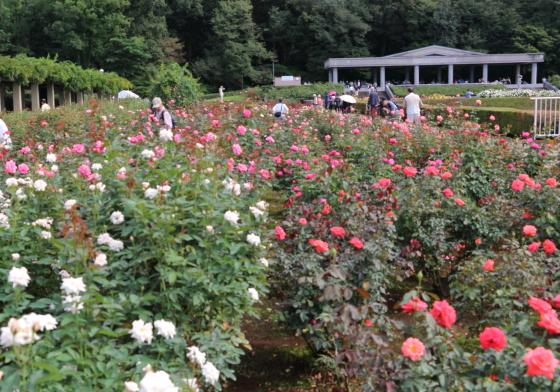 神代植物園のバラ