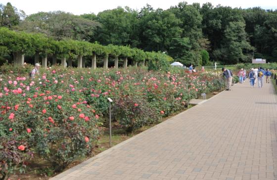 神代植物公園の秋バラの風景