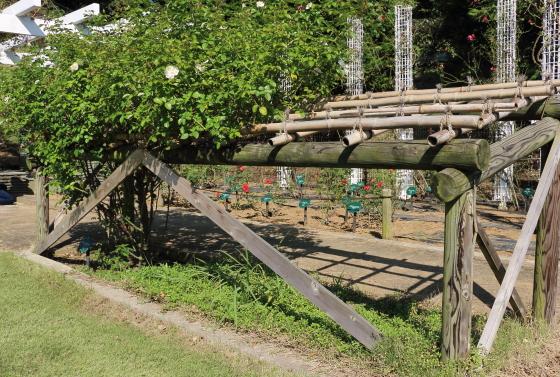 バラのベッド仕立て 生田緑地ばら苑にて