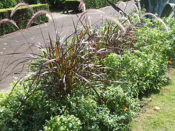 神代植物公園のハーブも茂っています