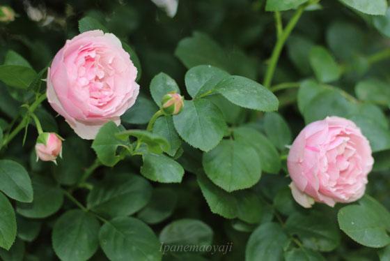 アントニオガウディはレオナルドダビンチの枝変わり品種です