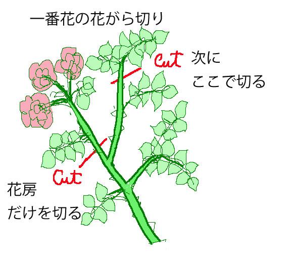 つるバラの一番花の花がら切り