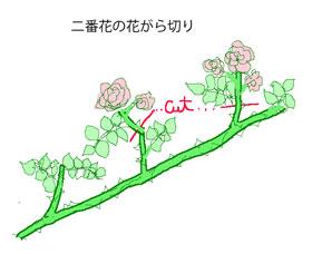 つるバラの花がら切り