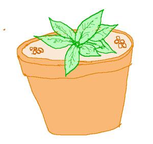 鉢栽培の追肥は置肥で施します