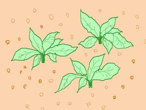 追肥を施す 花壇
