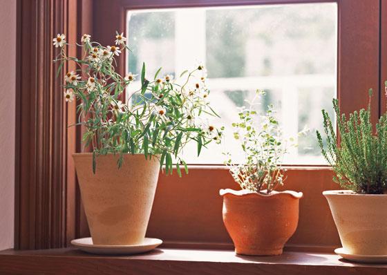 鉢植えで育てる