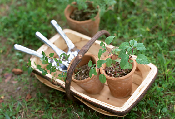 ガーデニングの風景 鉢植えでバラを育てる
