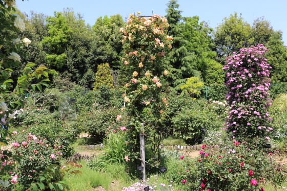 春の花菜ガーデンの風景