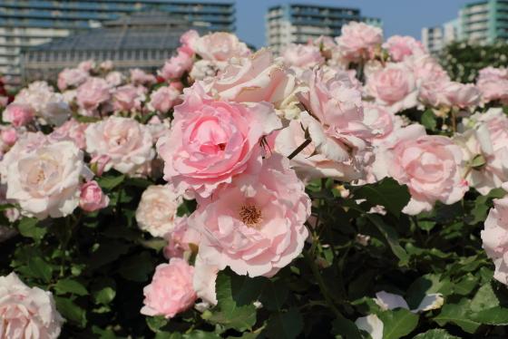 早春は多くの花をつけて開きもよい