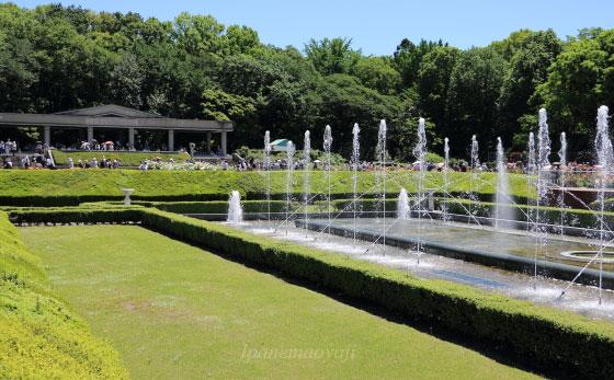 神代植物公園・バラ園の風景