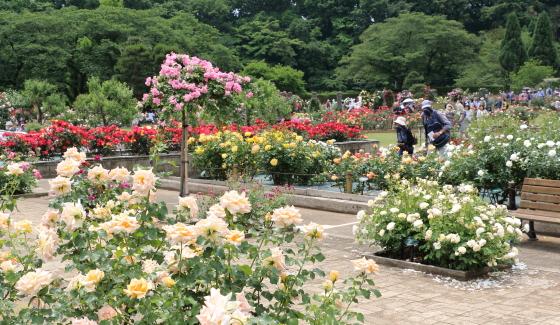 春の生田緑地ばら苑の風景