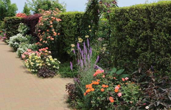 晴れた日の花菜ガーデンの風景