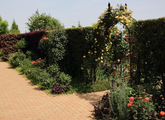 花菜ガーデンの風景・春