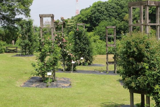 春の野津田バラ園の風景