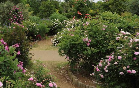 花菜ガーデンの風景です