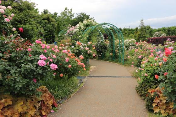花菜ガーデンの園内風景