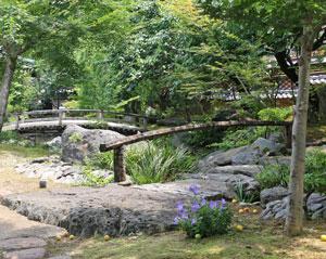 湯島天神 境内の梅の実が熟する