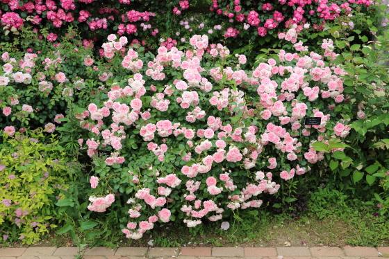 花菜ガーデンの風景