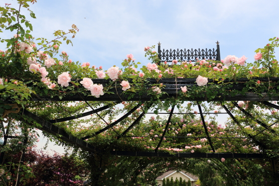 横浜イングリッシュガーデンの風景