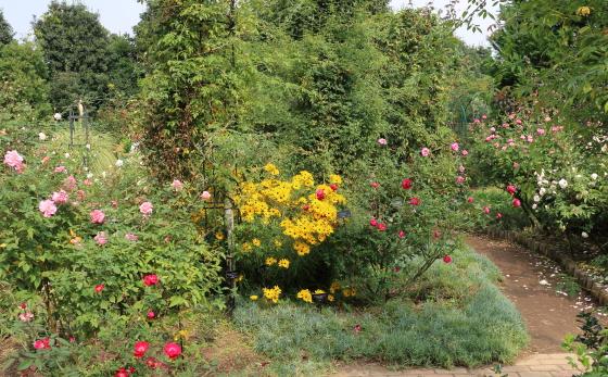 秋の花菜ガーデンの風景でっせ