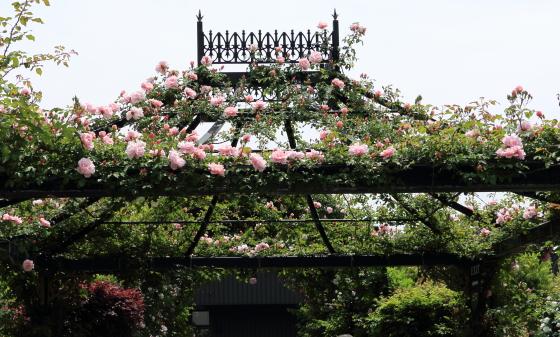 春の横浜イングリッシュガーデン