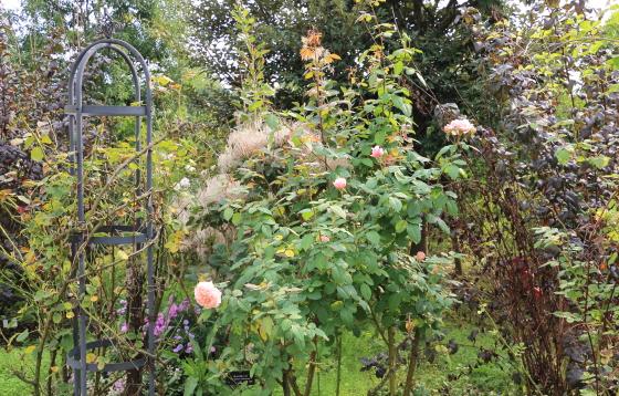 ポールボキューズは返り咲き品種
