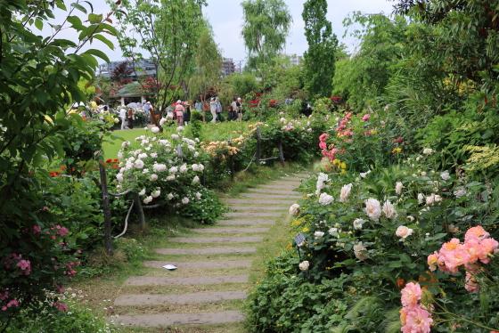 春の横浜のバラ園