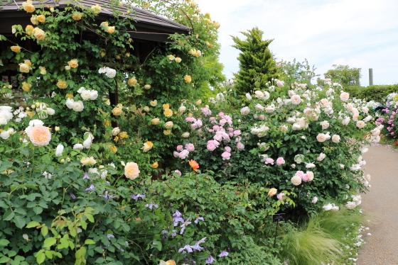 春の花菜ガーデンの風景です