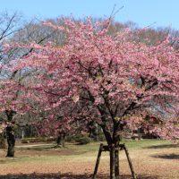 花粉の飛び交う公園にて