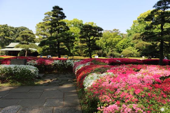 皇居東御苑の風景 ツツジが満開です