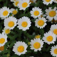 シンプルな花です