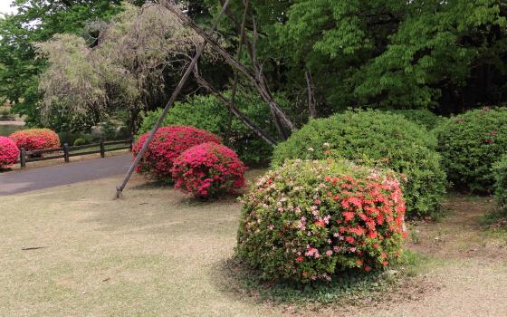 ツツジの鮮やかな花色