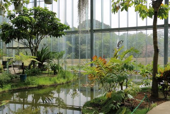 温室にも多くの植物が栽培されている
