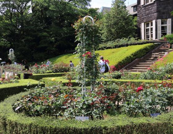春の旧古河庭園のバラ