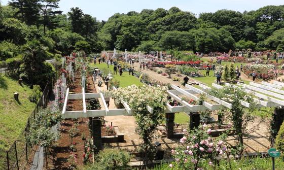 生田緑地ばら苑の春の風景