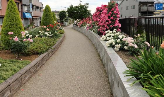 生田ばら苑への一般道路