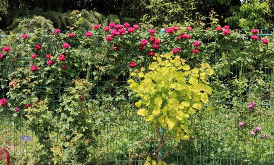 春の花菜ガーデンの風景7