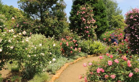 2018年春の花菜ガーデン