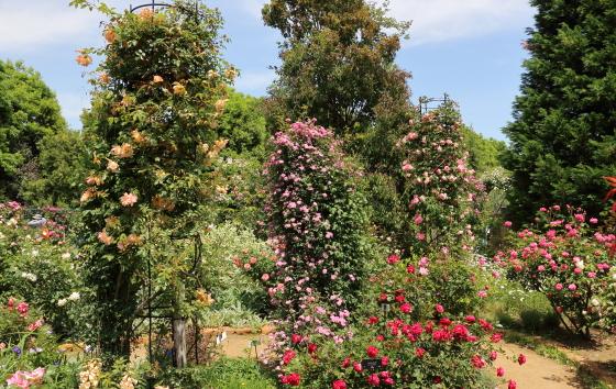 2018春の花菜ガーデン